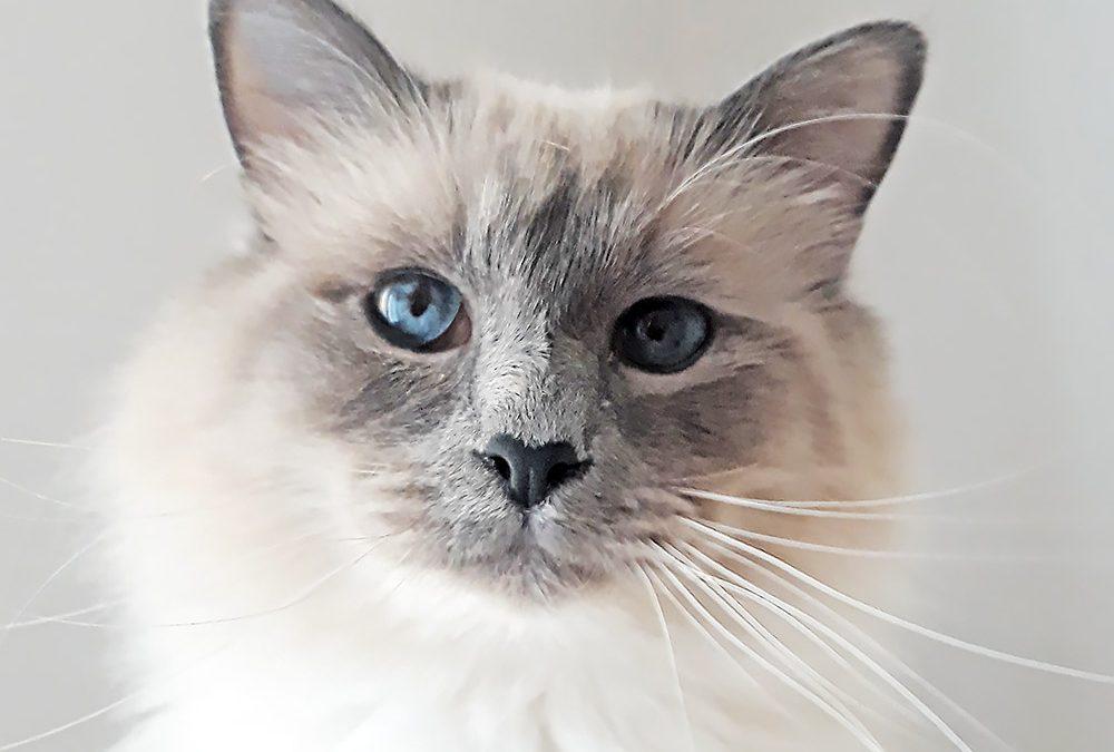 Convivenza gatto-bambino