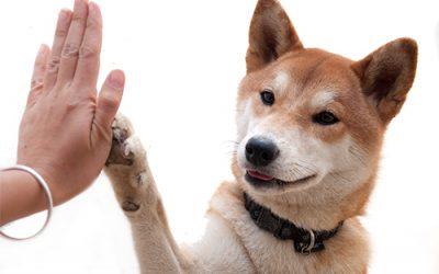 Carta dei diritti del cane